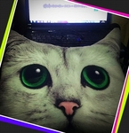猫クッション.jpg